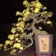 Hoa mai bonsai